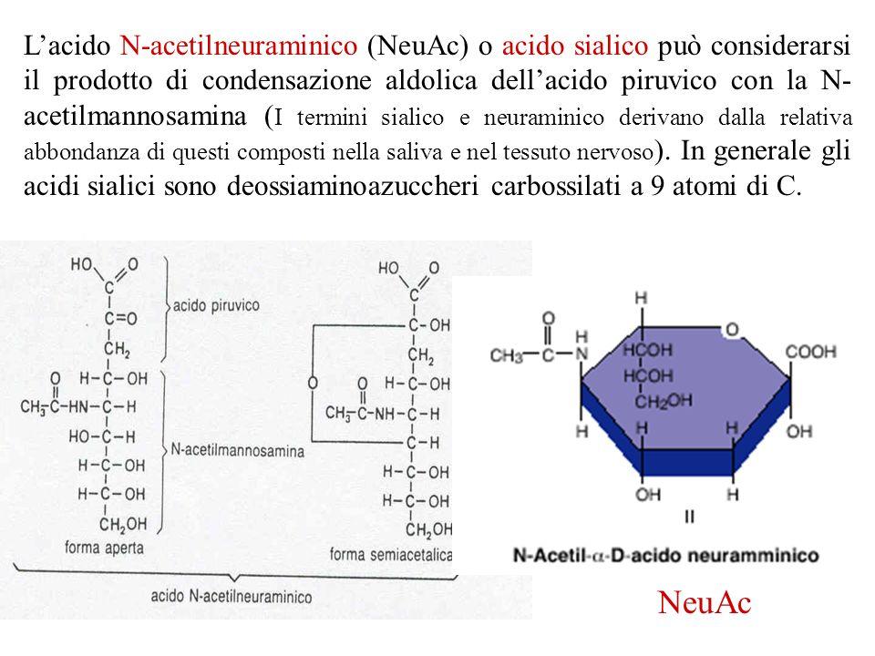 L'acido N-acetilneuraminico (NeuAc) o acido sialico può considerarsi il prodotto di condensazione aldolica dell'acido piruvico con la N-acetilmannosamina (I termini sialico e neuraminico derivano dalla relativa abbondanza di questi composti nella saliva e nel tessuto nervoso). In generale gli acidi sialici sono deossiaminoazuccheri carbossilati a 9 atomi di C.