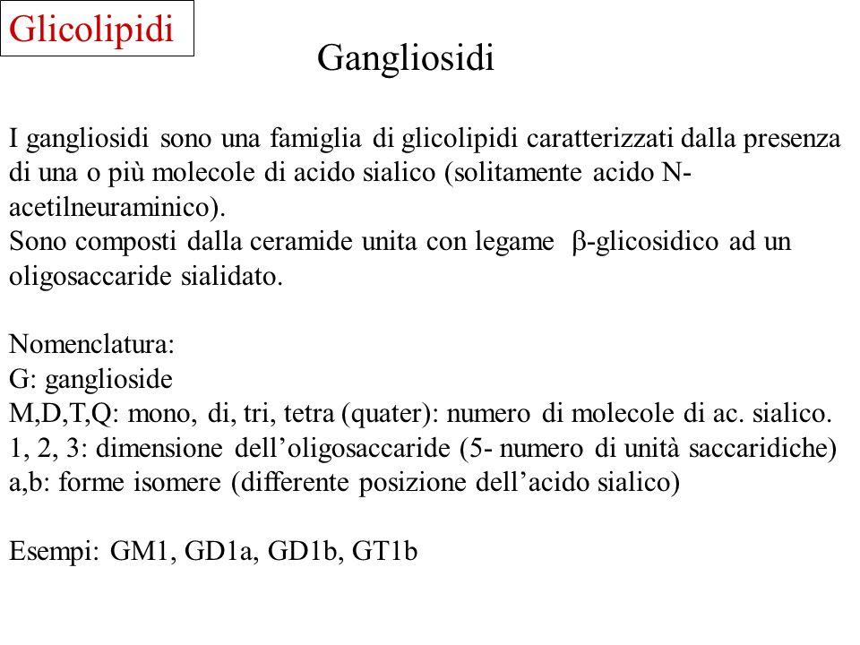 Glicolipidi Gangliosidi