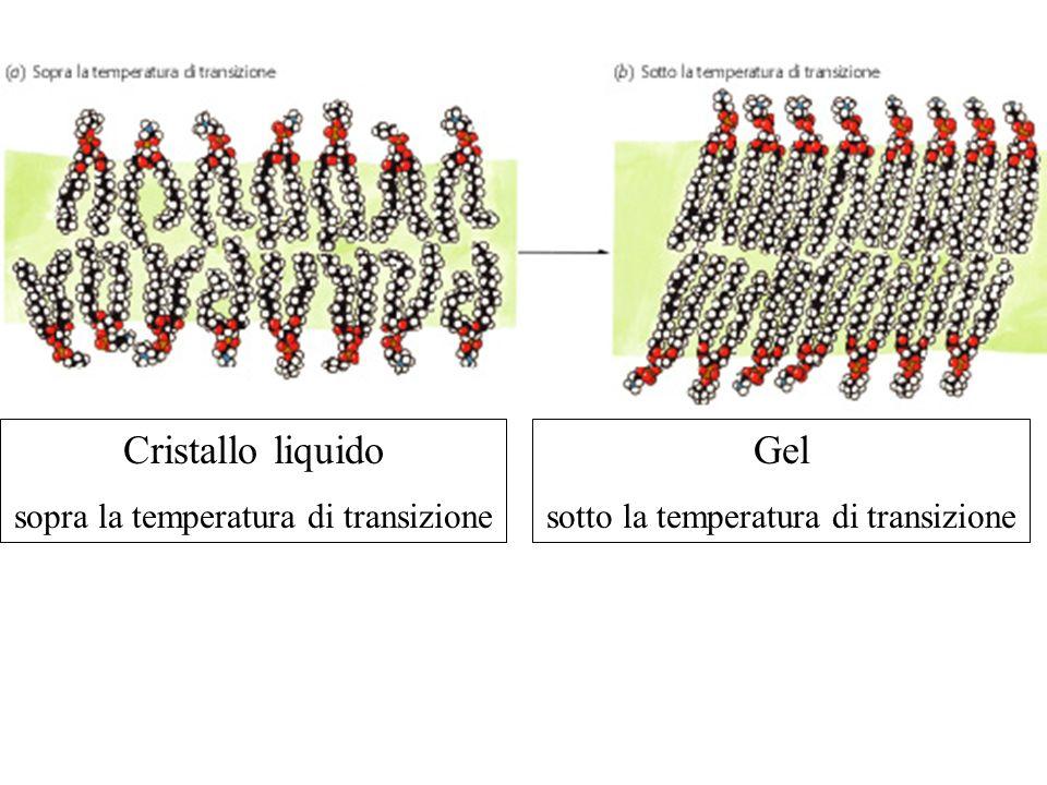 Cristallo liquido Gel sopra la temperatura di transizione