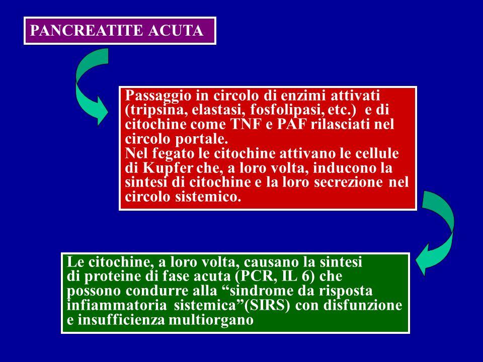 PANCREATITE ACUTA Passaggio in circolo di enzimi attivati. (tripsina, elastasi, fosfolipasi, etc.) e di.