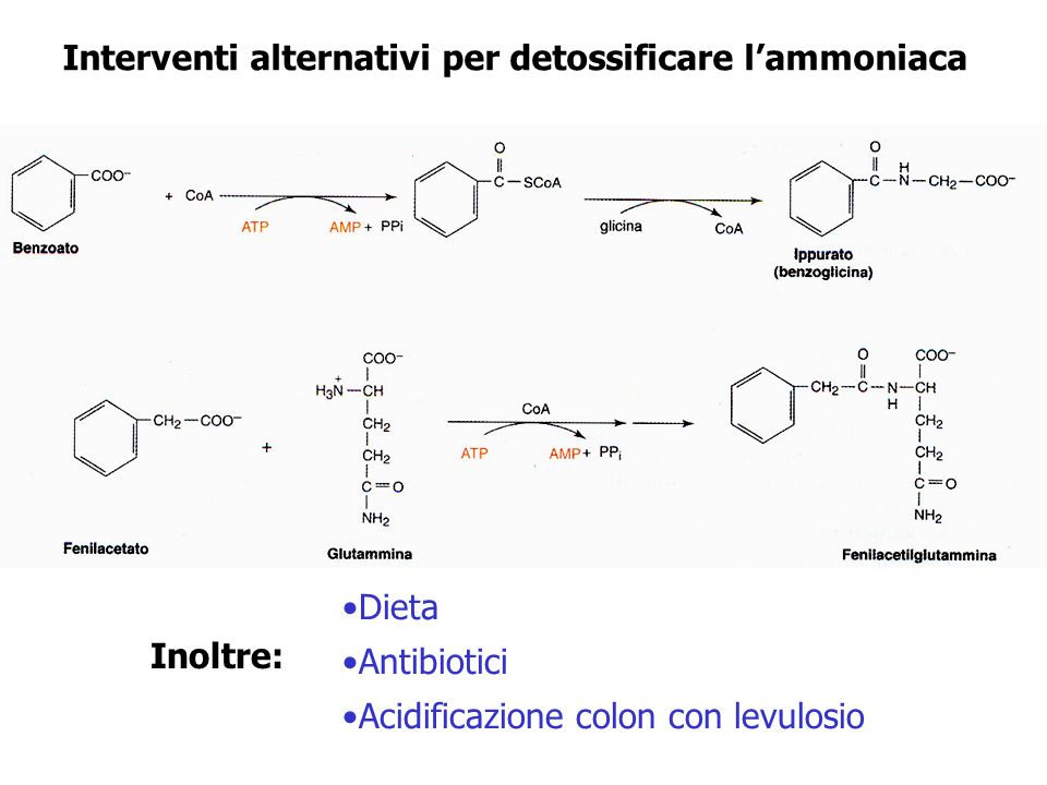 Interventi alternativi per detossificare l'ammoniaca