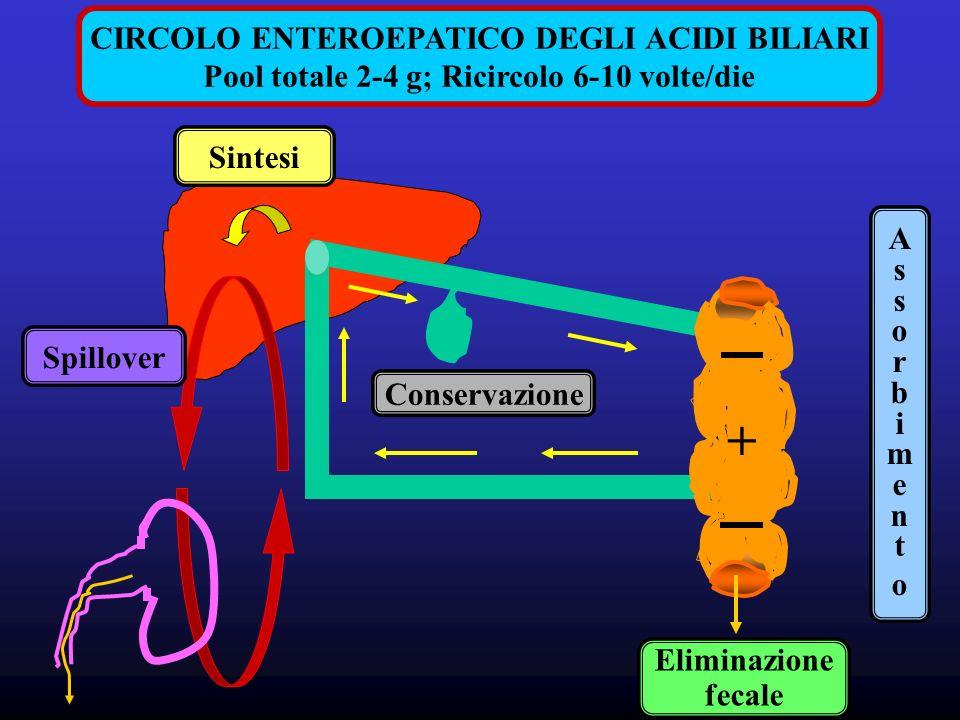 + CIRCOLO ENTEROEPATICO DEGLI ACIDI BILIARI