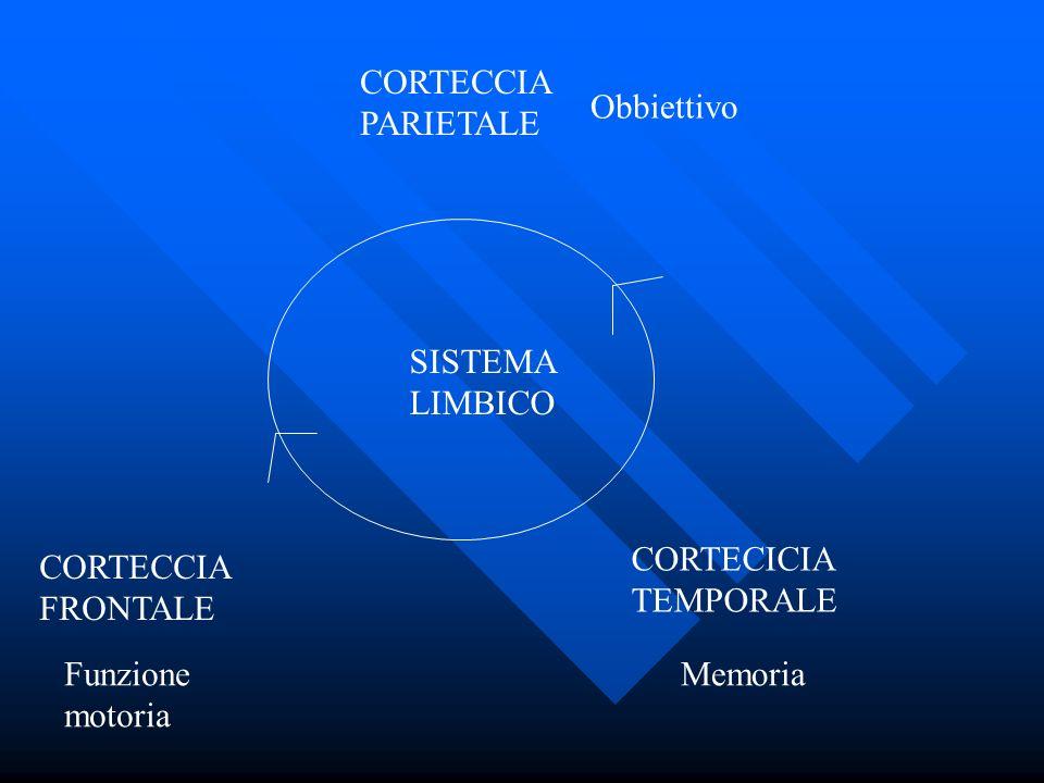 CORTECCIA PARIETALE Obbiettivo. SISTEMA LIMBICO. CORTECICIA TEMPORALE. CORTECCIA FRONTALE. Funzione motoria.
