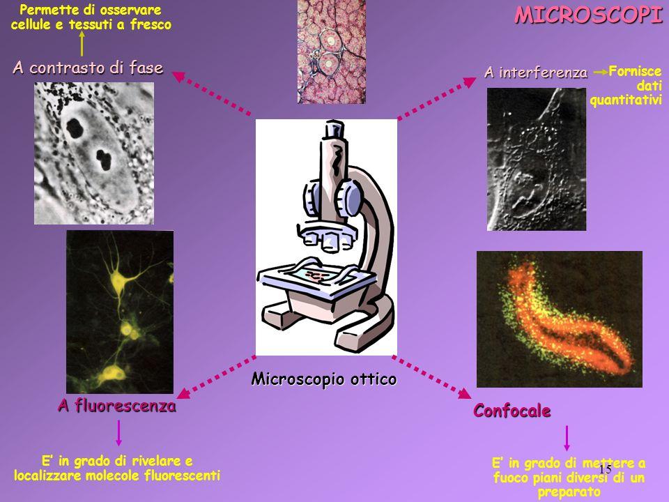 MICROSCOPI A contrasto di fase Microscopio ottico A fluorescenza