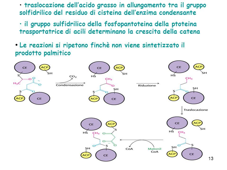 traslocazione dell'acido grasso in allungamento tra il gruppo solfidrilico del residuo di cisteina dell'enzima condensante