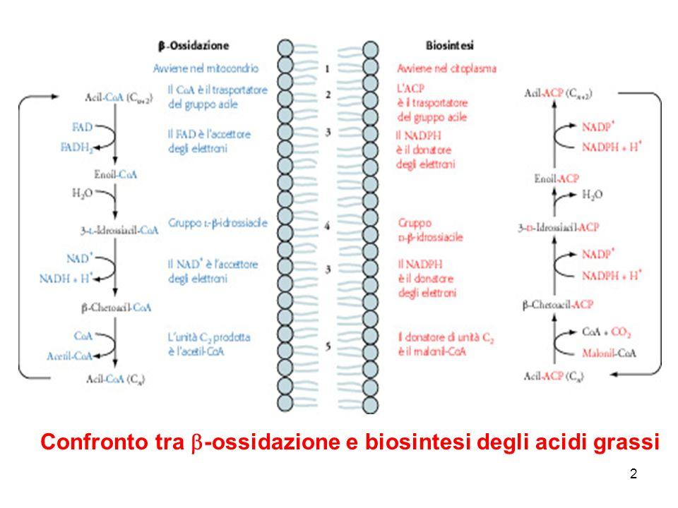 Confronto tra b-ossidazione e biosintesi degli acidi grassi