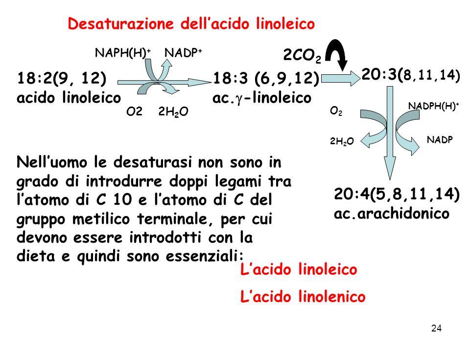 Desaturazione dell'acido linoleico