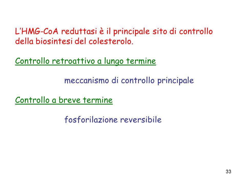 L'HMG-CoA reduttasi è il principale sito di controllo