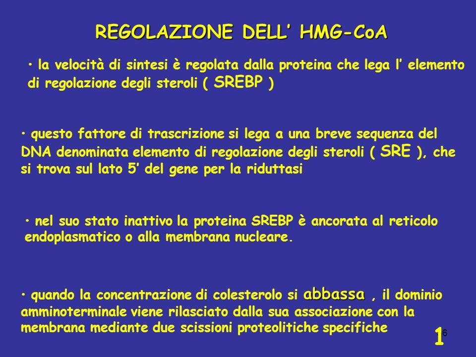 1 REGOLAZIONE DELL' HMG-CoA