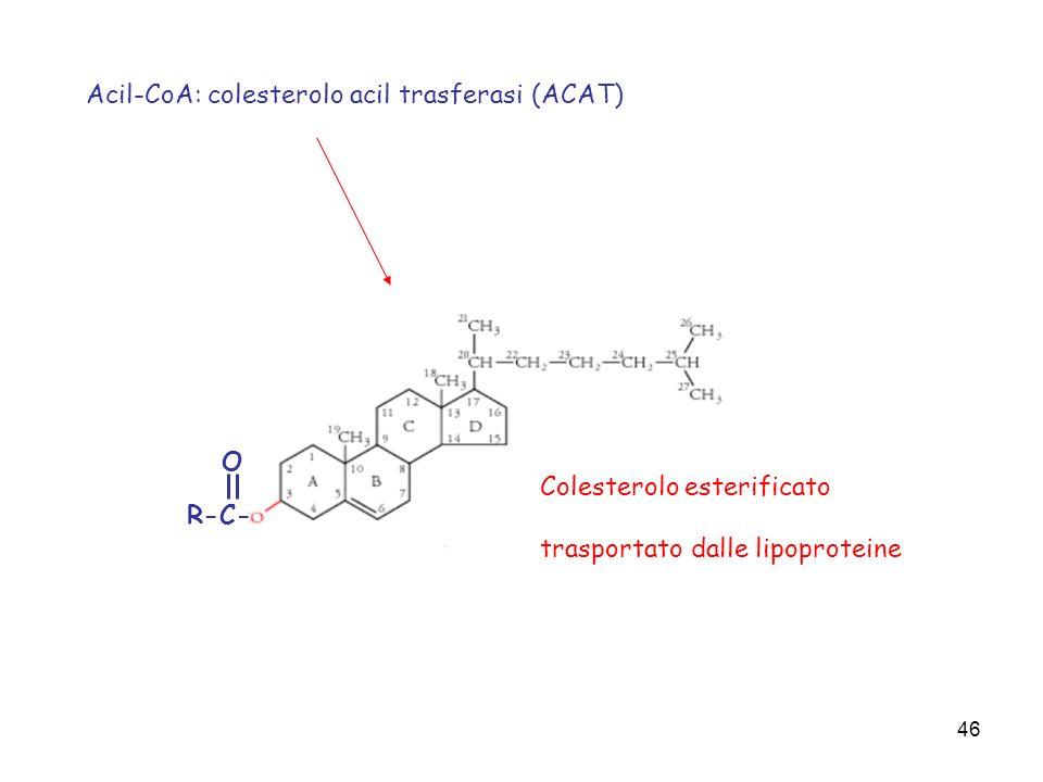 Acil-CoA: colesterolo acil trasferasi (ACAT)