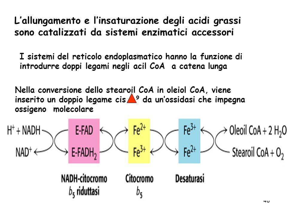 L'allungamento e l'insaturazione degli acidi grassi sono catalizzati da sistemi enzimatici accessori