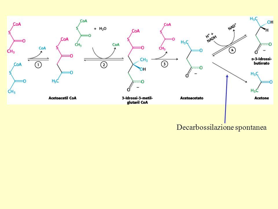 Decarbossilazione spontanea