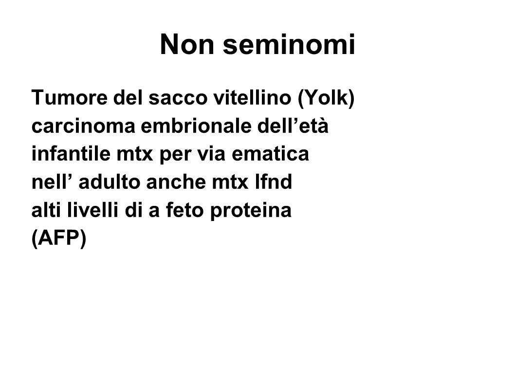 Non seminomi Tumore del sacco vitellino (Yolk)