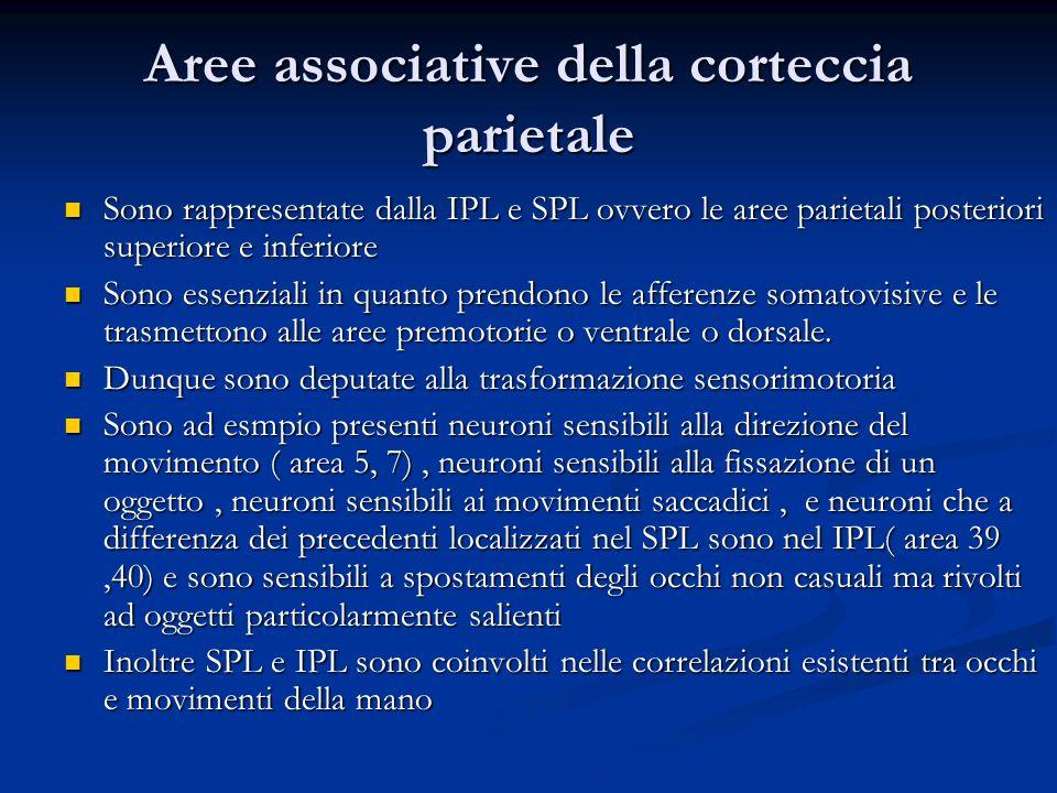 Aree associative della corteccia parietale