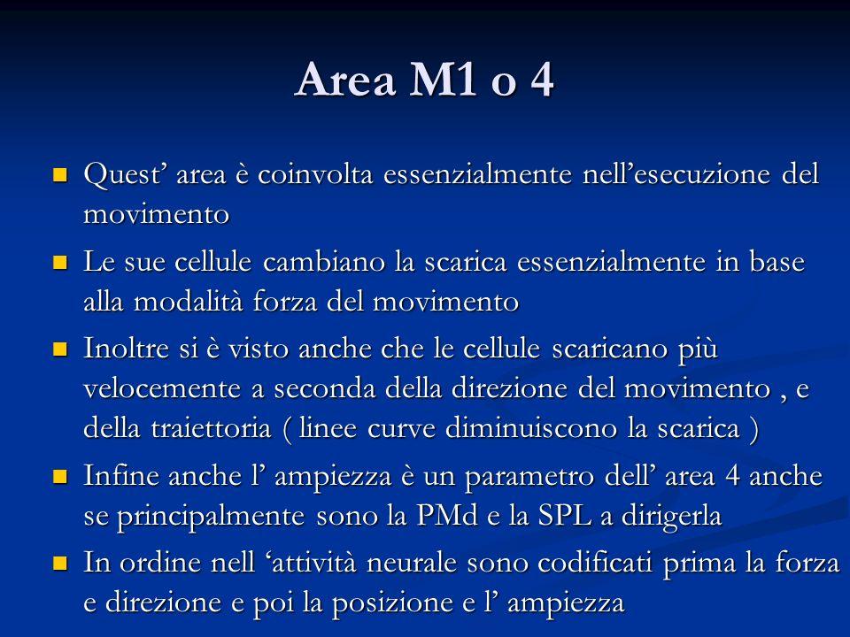 Area M1 o 4 Quest' area è coinvolta essenzialmente nell'esecuzione del movimento.