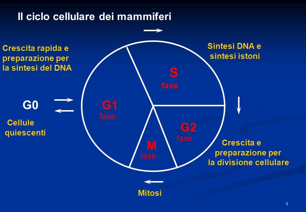 S G0 G1 G2 M Il ciclo cellulare dei mammiferi Sintesi DNA e