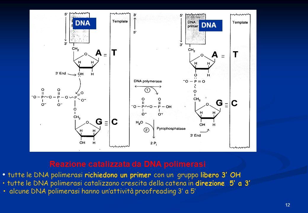 Reazione catalizzata da DNA polimerasi