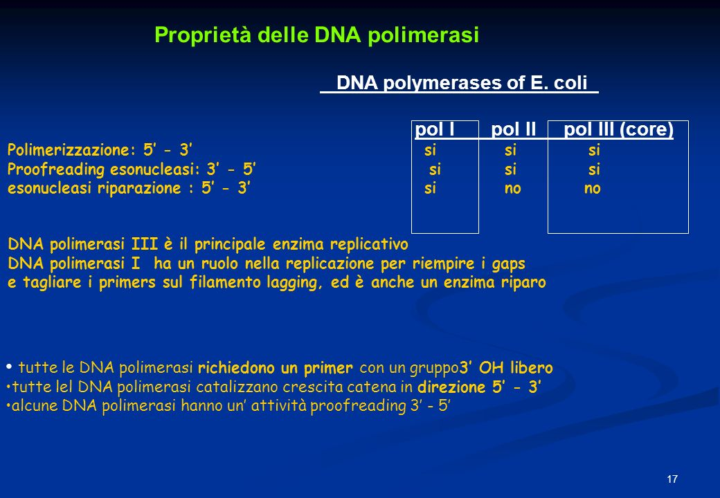 Proprietà delle DNA polimerasi DNA polymerases of E. coli_