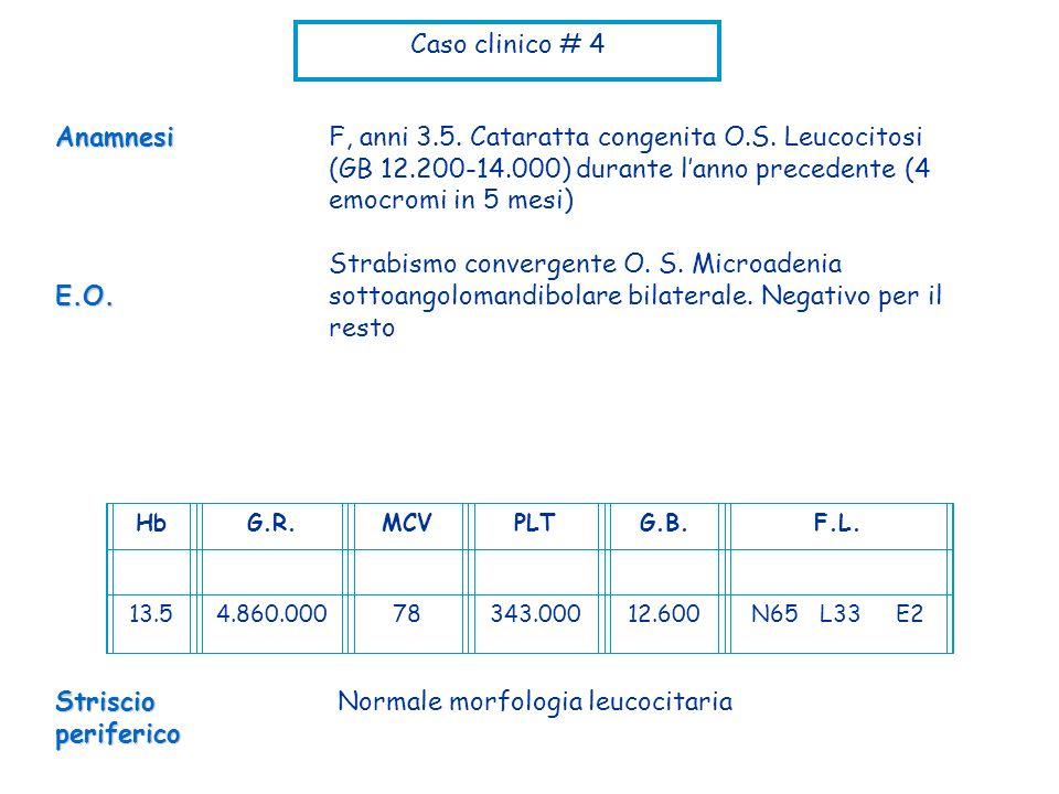 Normale morfologia leucocitaria