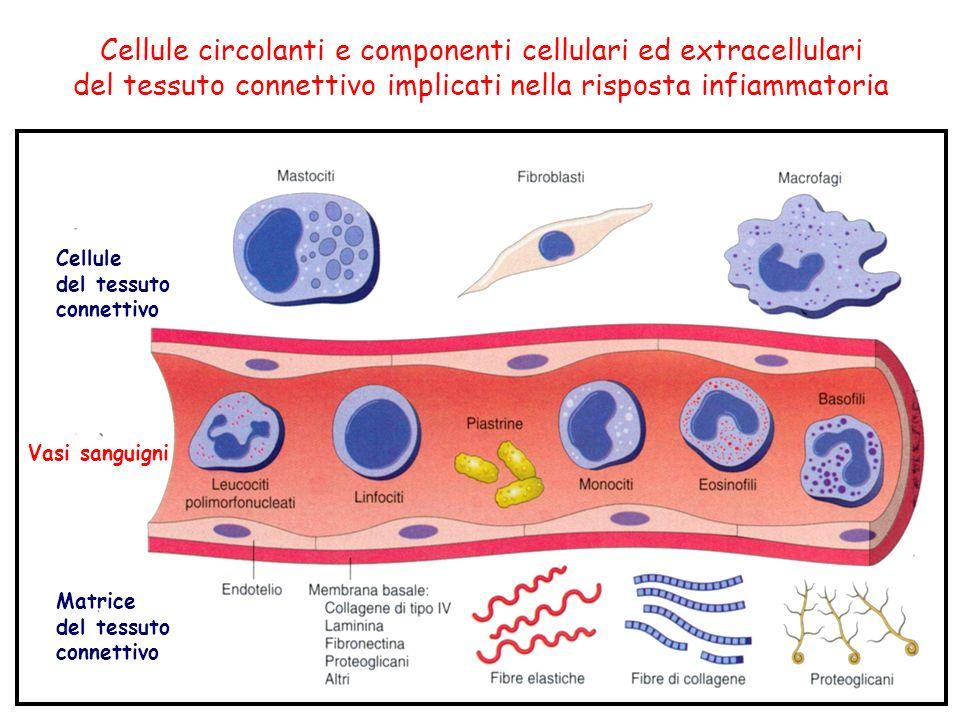 Cellule circolanti e componenti cellulari ed extracellulari