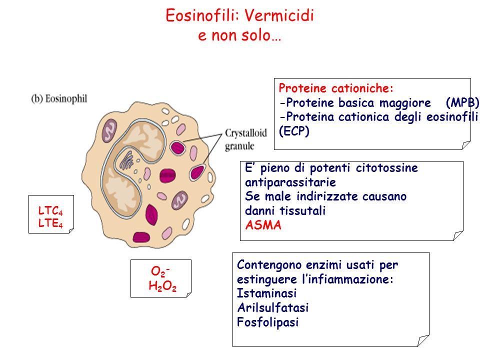Eosinofili: Vermicidi e non solo…