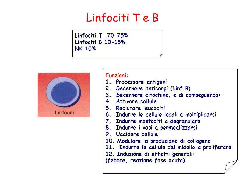 Linfociti T e B 18 Linfociti T 70-75% Linfociti B 10-15% NK 10%