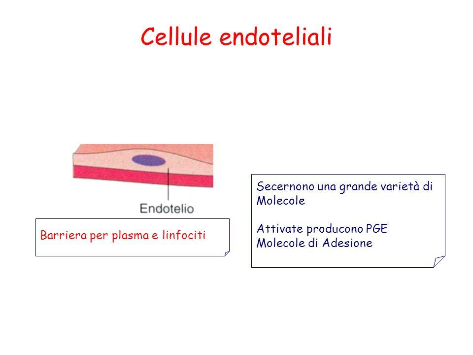 Cellule endoteliali Secernono una grande varietà di Molecole