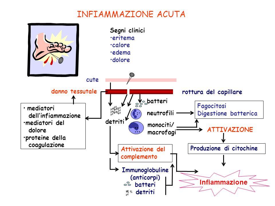 .. … INFIAMMAZIONE ACUTA .. . .. Infiammazione 7 Segni clinici eritema