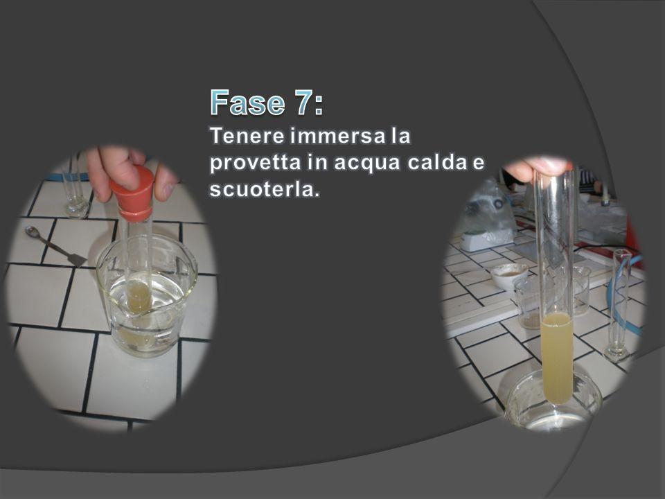 Fase 7: Tenere immersa la provetta in acqua calda e scuoterla.