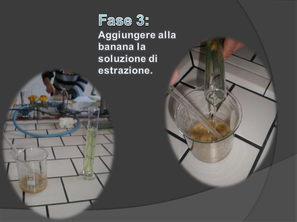 Fase 3: Aggiungere alla banana la soluzione di estrazione.