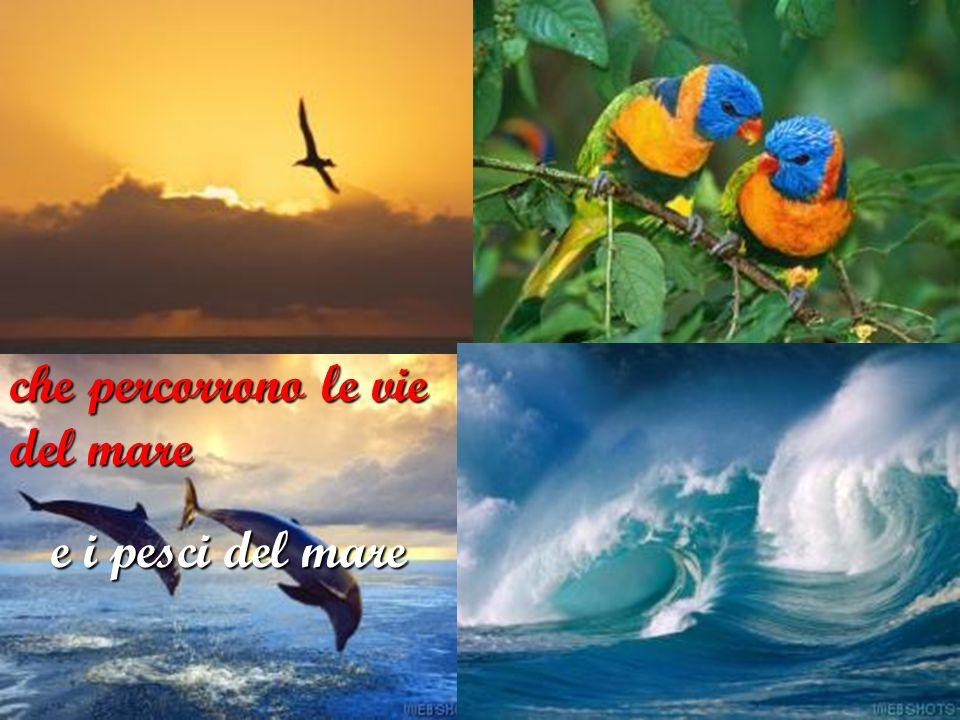gli uccelli del cielo che percorrono le vie del mare e i pesci del mare