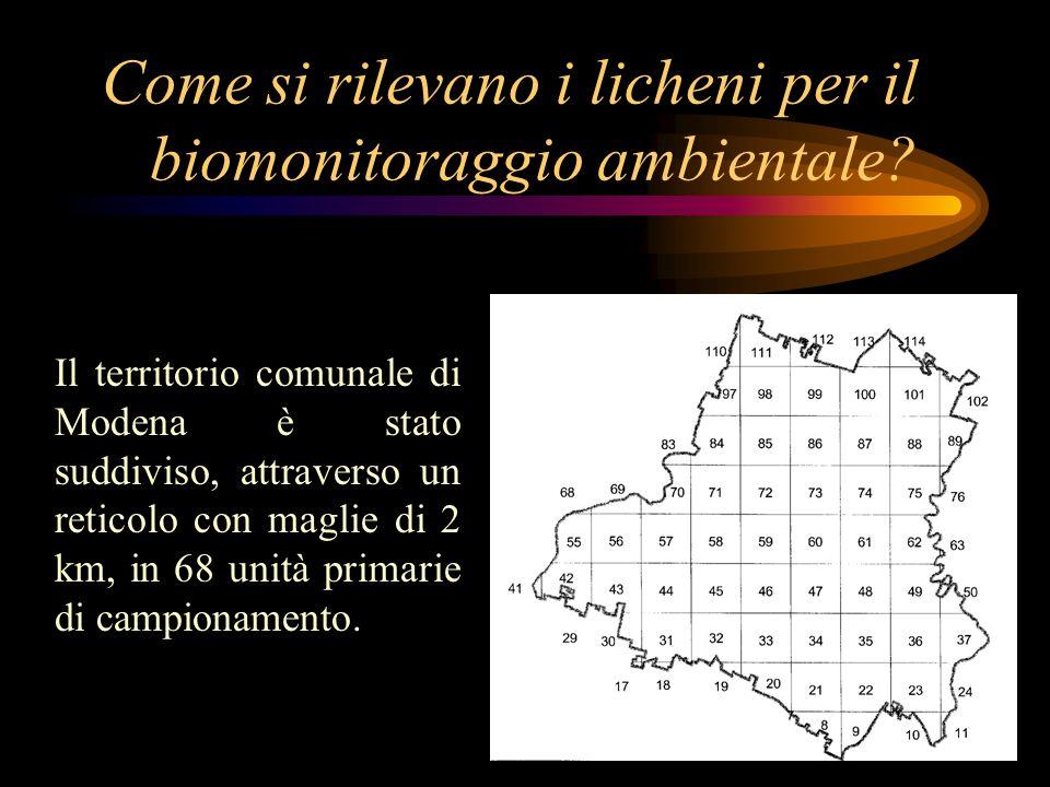 Come si rilevano i licheni per il biomonitoraggio ambientale