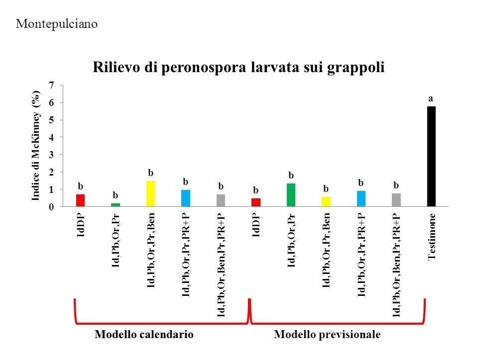 Rilievo di peronospora larvata sui grappoli