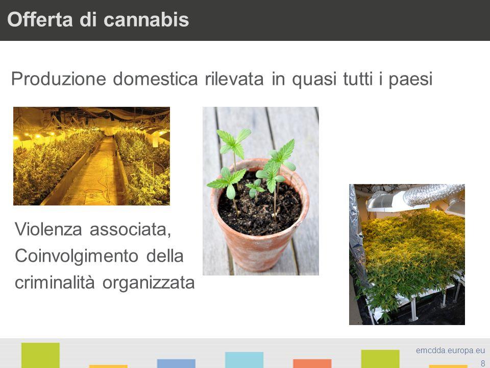 Offerta di cannabis Produzione domestica rilevata in quasi tutti i paesi. Violenza associata, Coinvolgimento della.