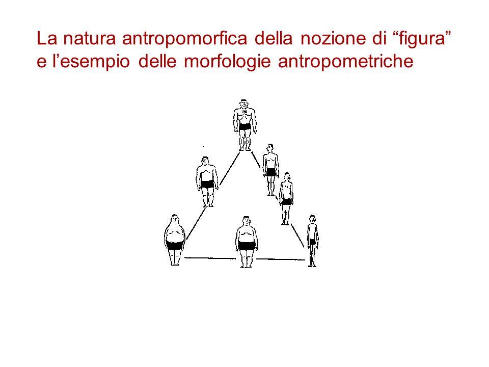 La natura antropomorfica della nozione di figura e l'esempio delle morfologie antropometriche