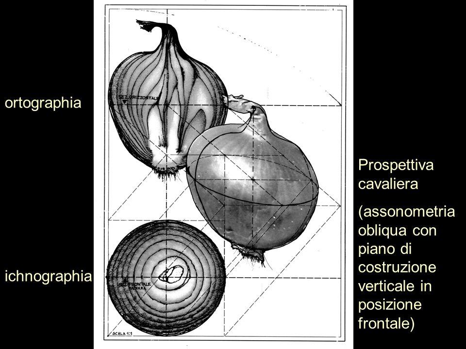 ortographiaProspettiva cavaliera. (assonometria obliqua con piano di costruzione verticale in posizione frontale)