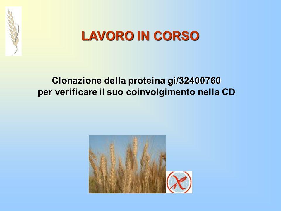 LAVORO IN CORSO Clonazione della proteina gi/32400760