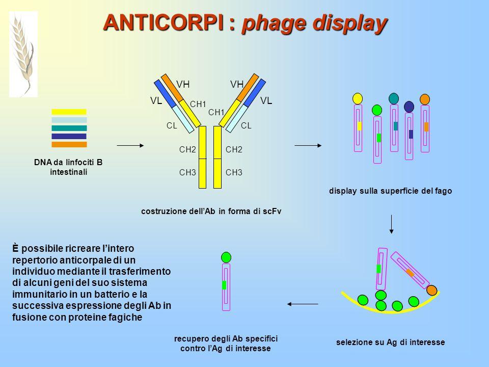 ANTICORPI : phage display