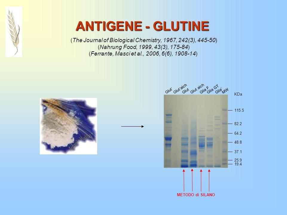 ANTIGENE - GLUTINE (The Journal of Biological Chemistry, 1967, 242(3), 445-50) (Nahrung Food, 1999, 43(3), 175-84)