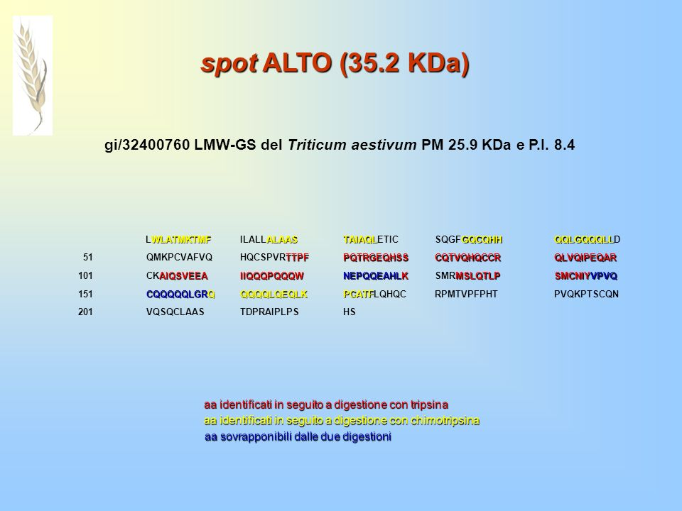 spot ALTO (35.2 KDa)gi/32400760 LMW-GS del Triticum aestivum PM 25.9 KDa e P.I. 8.4. LWLATMKTMF. ILALLALAAS.