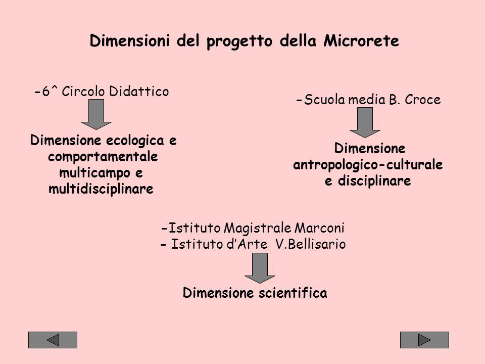 Dimensioni del progetto della Microrete