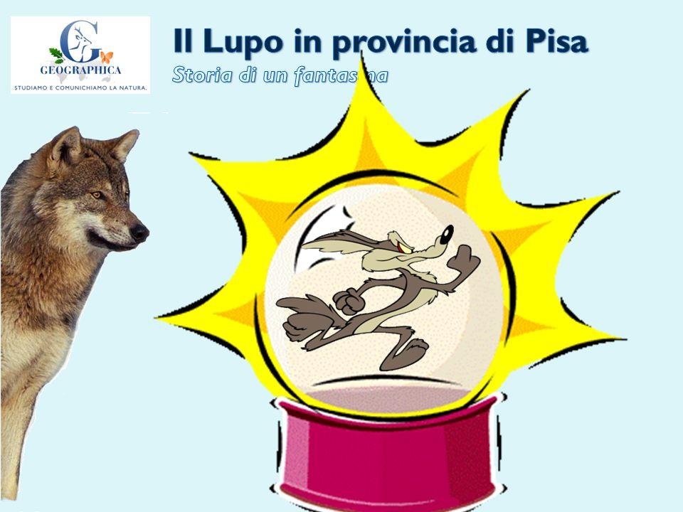 Il Lupo in provincia di Pisa Storia di un fantasma