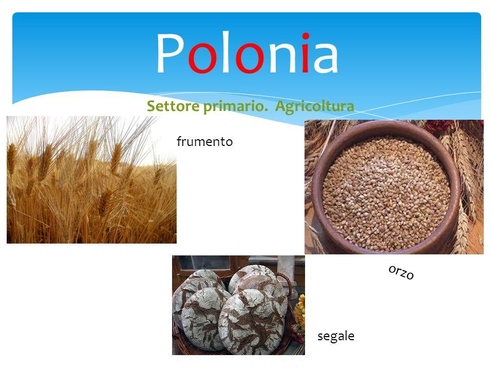 Polonia Settore primario. Agricoltura frumento orzo segale