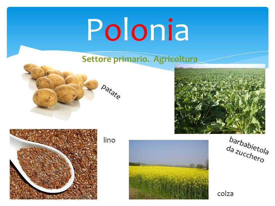 Polonia Settore primario. Agricoltura patate lino
