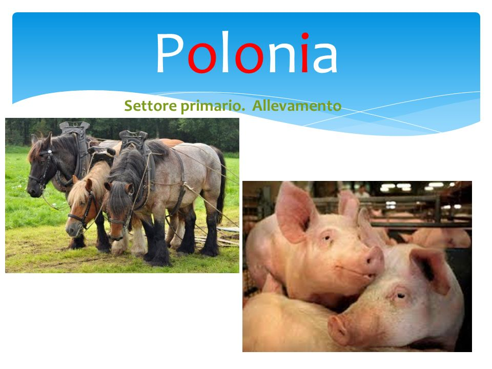 Polonia Settore primario. Allevamento