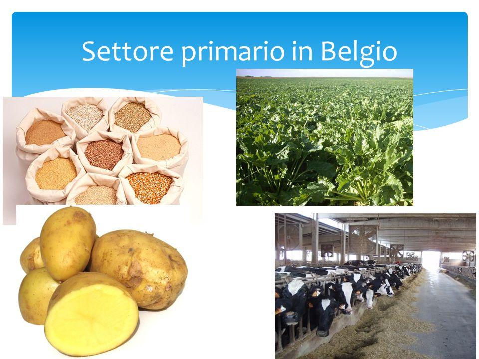 Settore primario in Belgio