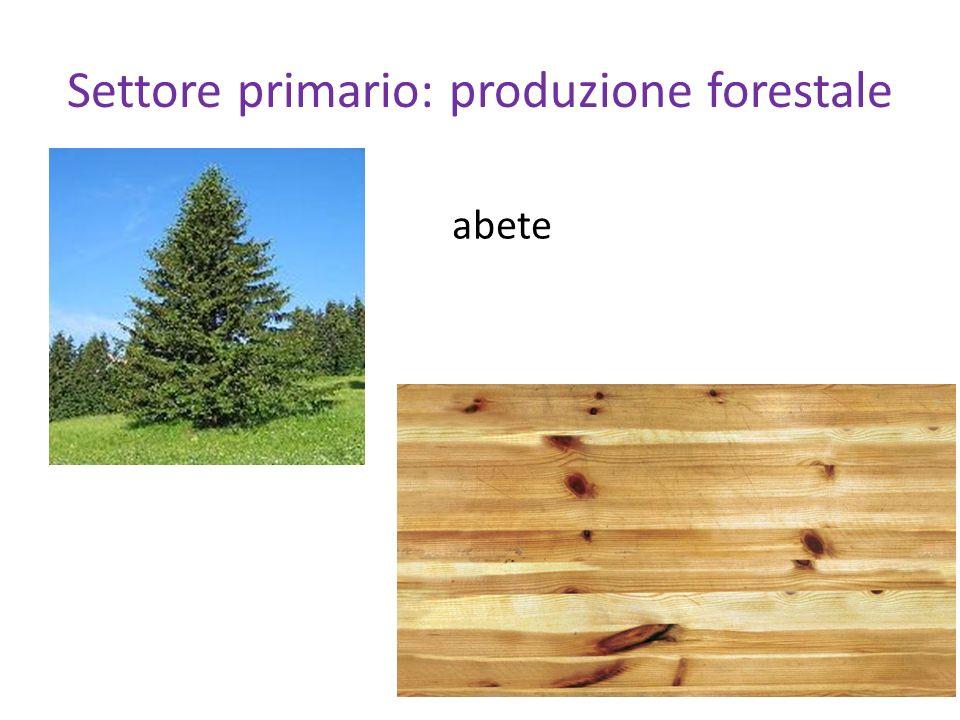 Settore primario: produzione forestale