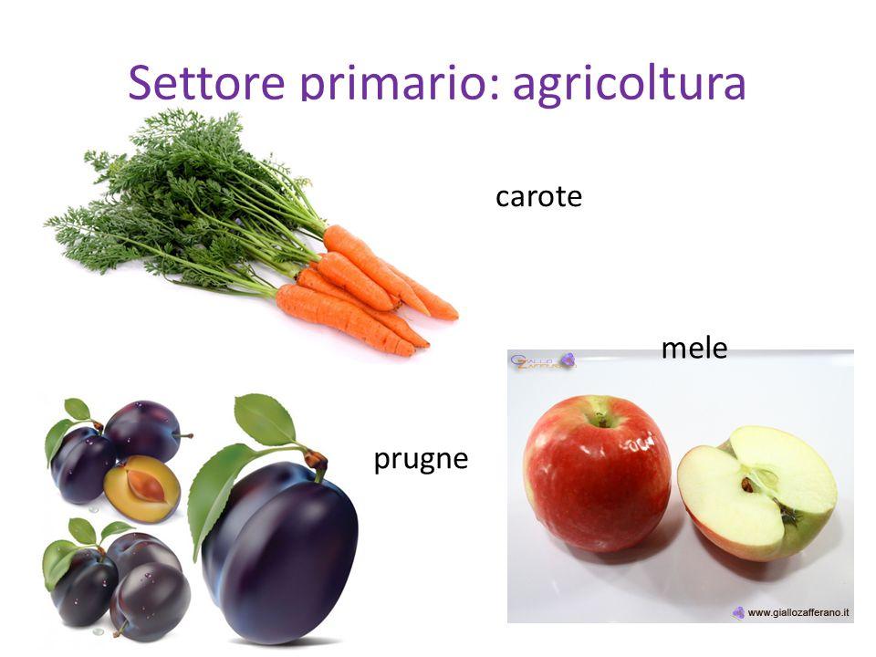 Settore primario: agricoltura
