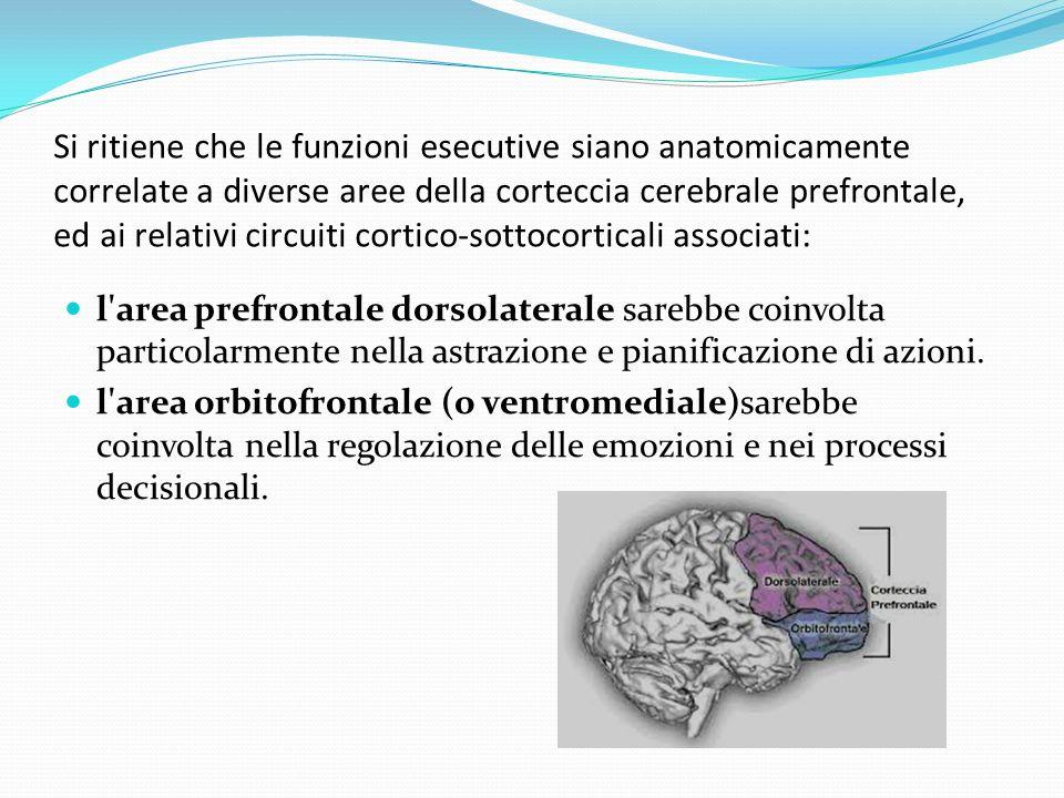 Si ritiene che le funzioni esecutive siano anatomicamente correlate a diverse aree della corteccia cerebrale prefrontale, ed ai relativi circuiti cortico-sottocorticali associati: