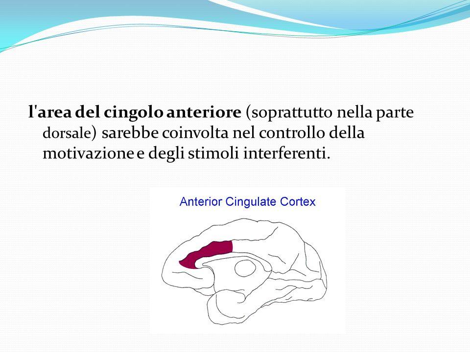 l area del cingolo anteriore (soprattutto nella parte dorsale) sarebbe coinvolta nel controllo della motivazione e degli stimoli interferenti.